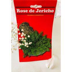 Rosa de Jericó Grande (milagrosa)